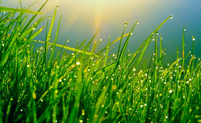 """The grass isn't greener, there's just a different light shining on it."" -Anonymous"